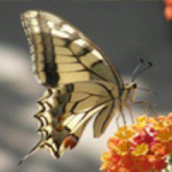 butterfly_16564627102012_
