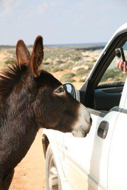 donkey_16552227102012_